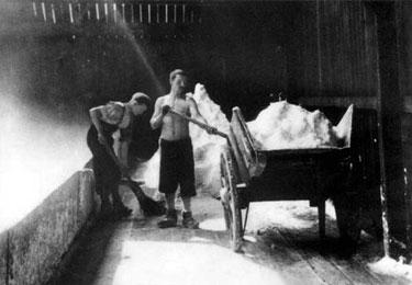 Salt Industry: Loading Barrows with Salt